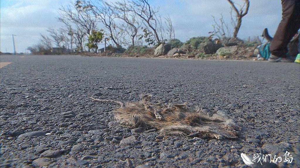 943-2-12_0道路、車輛,帶來人們行動上的便利,有時候,卻也為動物們帶來死亡。