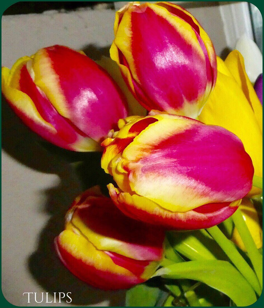 Bright And Beautiful Tulips Symbolism Red Perfect Love Flickr