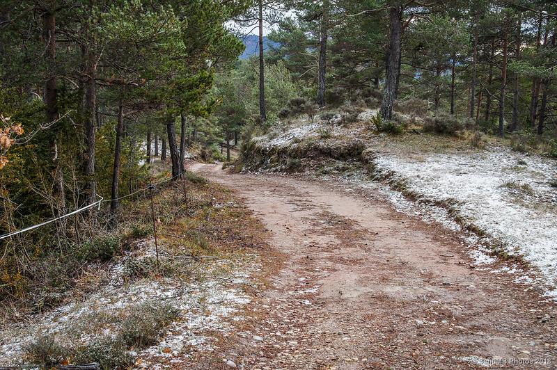 Por los bosques de Sant Jaume de Frontanyà