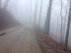Foggy FS42