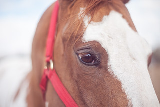 3/52 | Horse Eye | My Life in 52 | by Chasing J Bird {rosie.f}