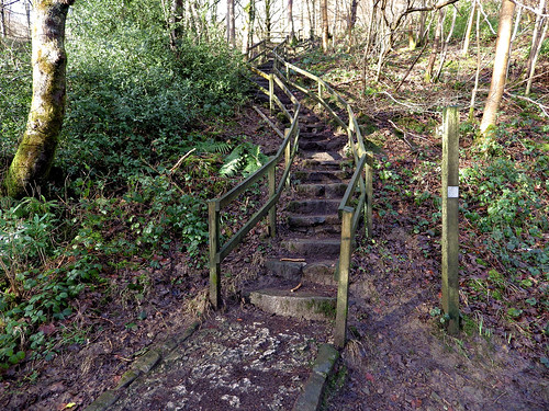 Steps to Parkin Clough