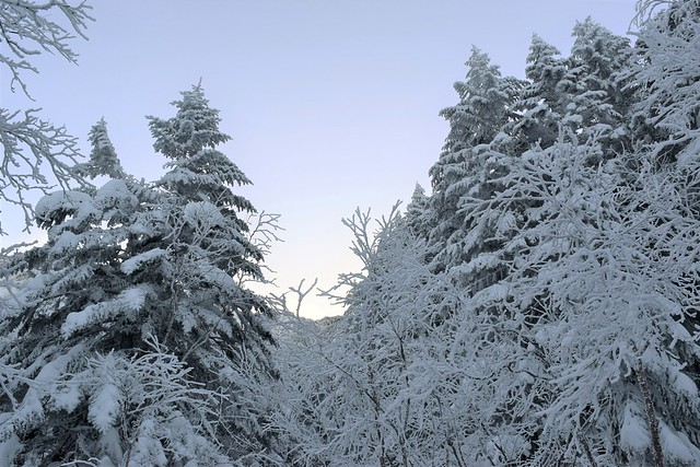 明け方の樹氷