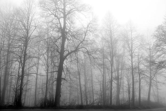 Königstuhl, der Hausberg von Heidelberg ... Januar 2018 ... Dichter Nebel ... Foto: Brigitte Stolle