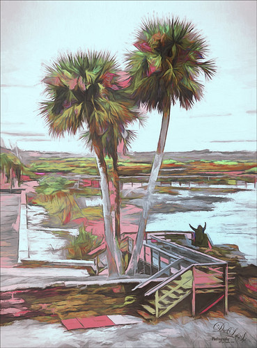 Image of Palm Trees from Castillo de San Marcos fort