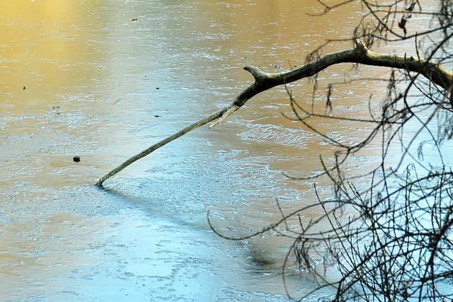 Herzogenriedpark Mannheim: Februar-Impressionen ... Foto: Brigitte Stolle 2018 ... der Fontänen-See mit dünner Eisschicht