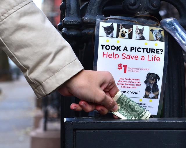Donativos que hay para animales en la puerta de la casa de Sexo en Nueva York