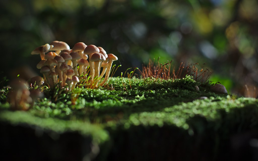 Little Mushroom Forest Wallpaper By Philipp H 228 Gi