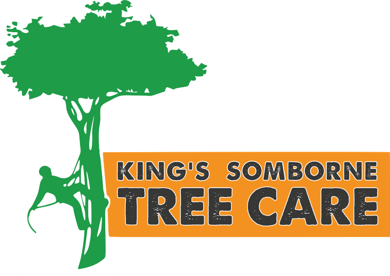 King's Somborne Tree Surgeon