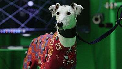 A dog wearing a motion capture suit