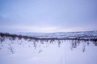 DSC_7739 | by adventurelandlapland