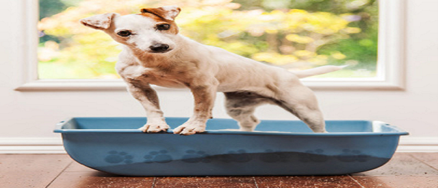Keeping Your Dog Out Of The Cat Litter