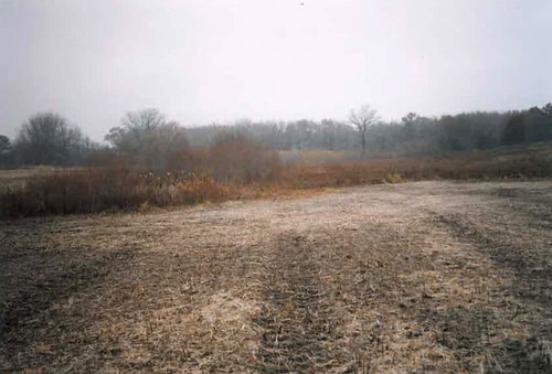 Before photo of a wetland