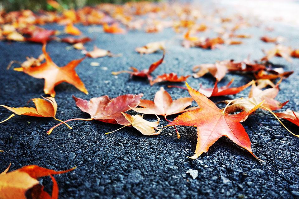 落葉枯枝放空中