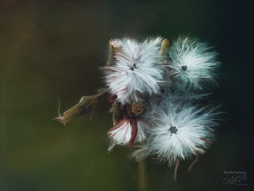 Digitally Painted image of Dandelions