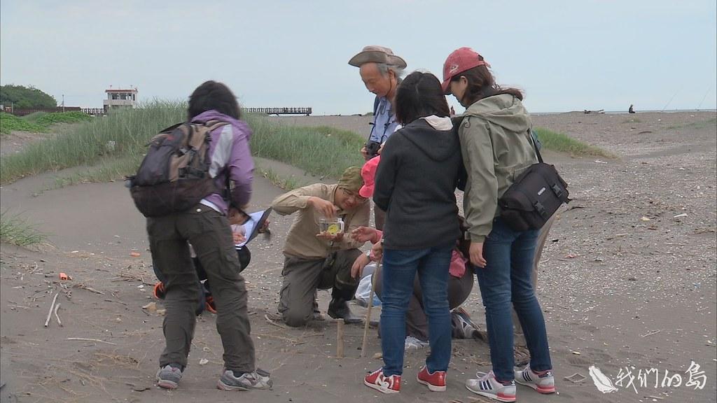 940-3-52荒野保護協會志工來到挖子尾,在沙灘上展開搜索,仔細尋找東方環頸鴴的巢位,進行紀錄。