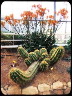 Trichocereus candicans & Aloe | by Umadeave