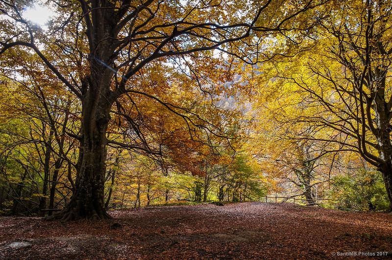 EL bosque dorado del Nacedero del Urederra