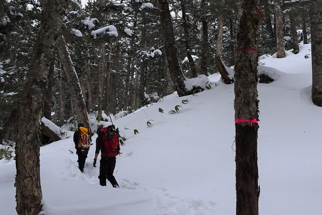 焼岳登山道のピンクテープ