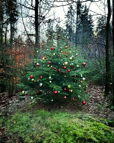 nature Christmas in the woods. . . ....