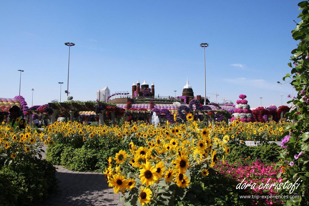 dubai miracle garden by dora christofi - Dubai Miracle Garden