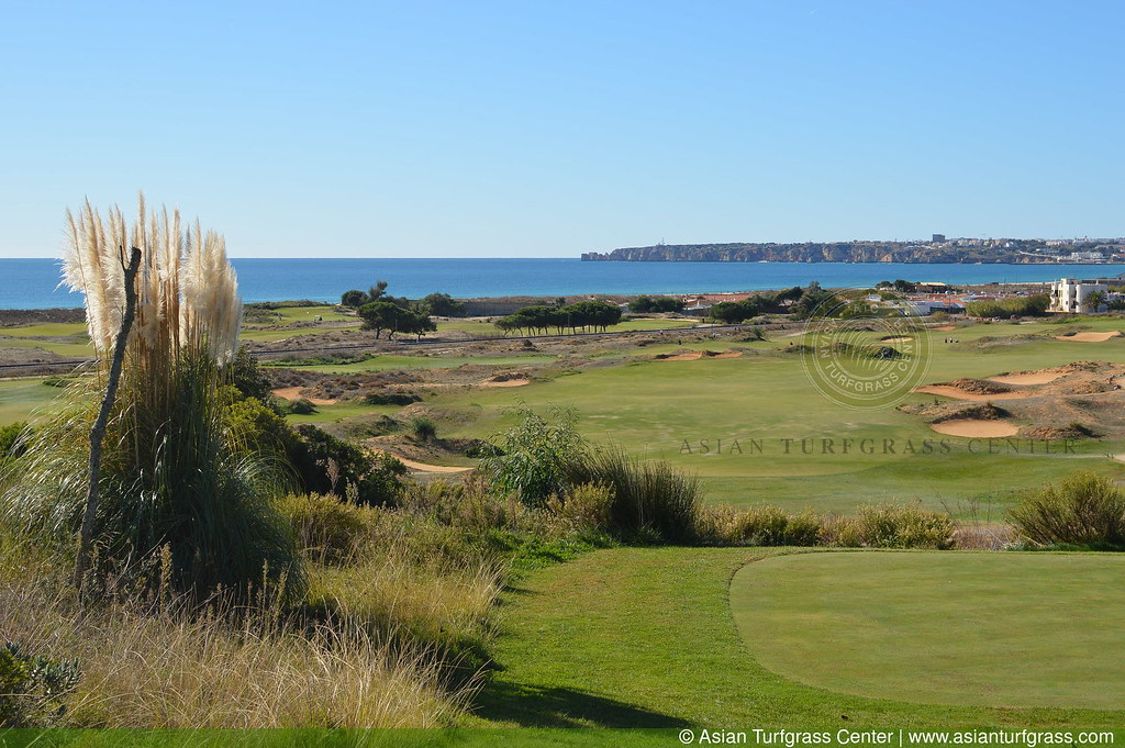 Tifway 419 fairways in the Algarve