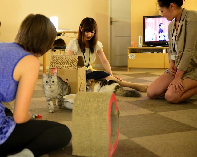 Japoneses jugando con los gatos arriba y abajo