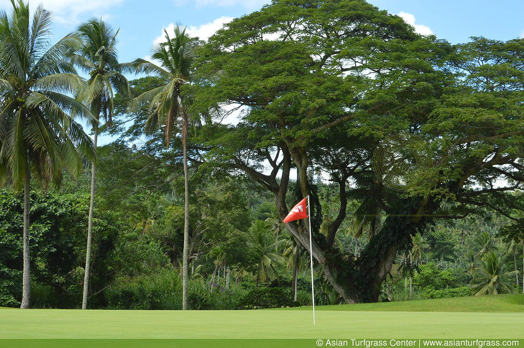 korai green at Canlubang