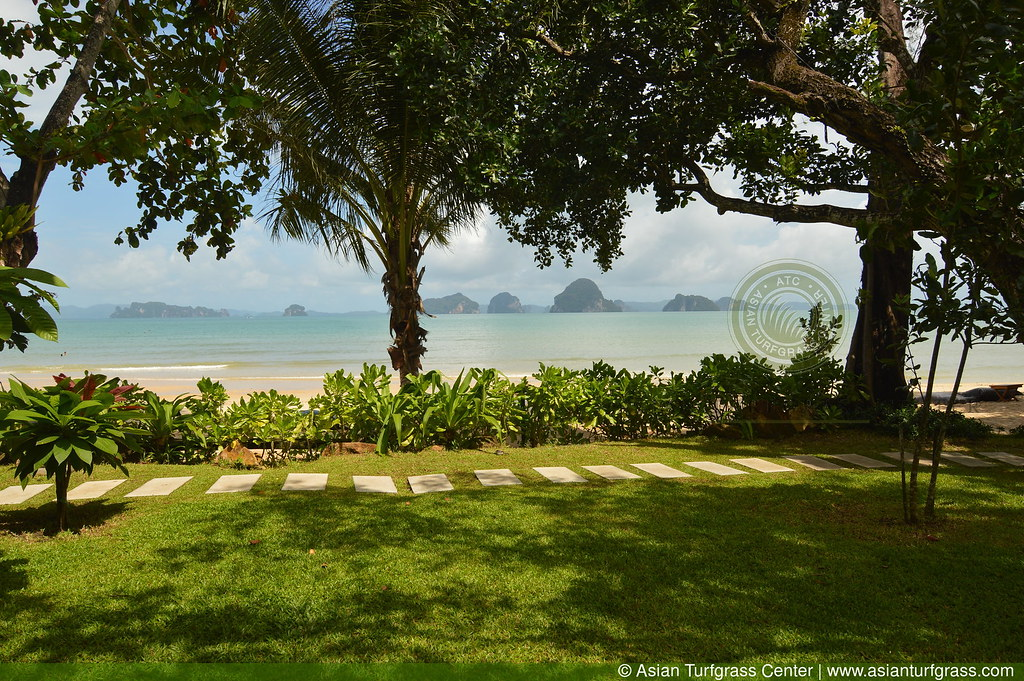 tropical carpetgrass lawn in Krabi