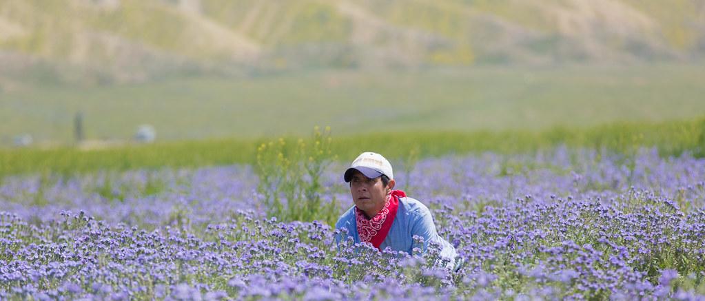 815a2731 hiding in a field of blue flowers the blue flower flickr
