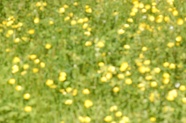 Blurred pattern of green and yellow
