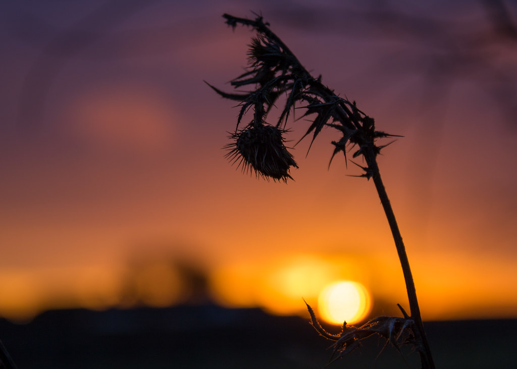 A new beginning - Happy New Year! | Susanne Nilsson | Flickr