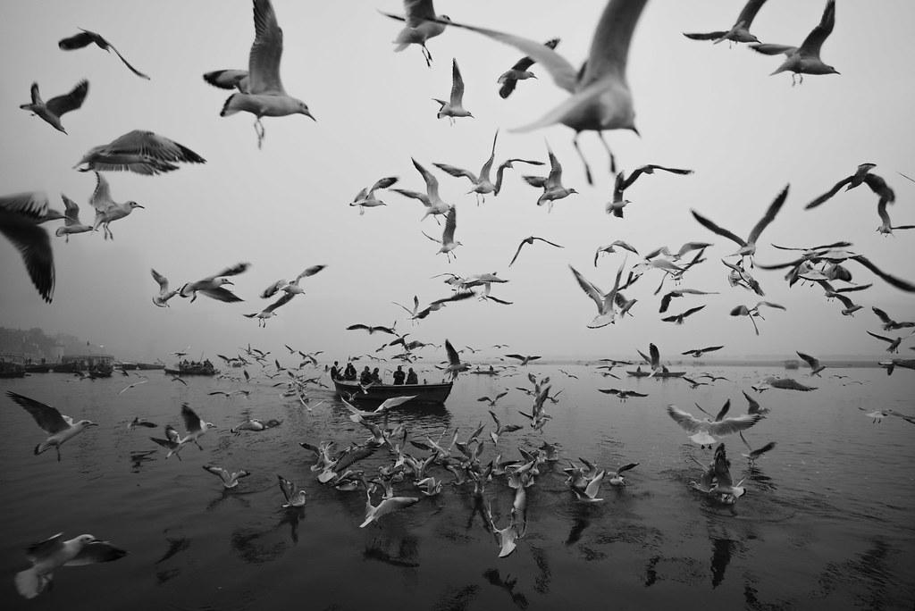 Seagulls   Varanasi 2017   by Ravikanth K