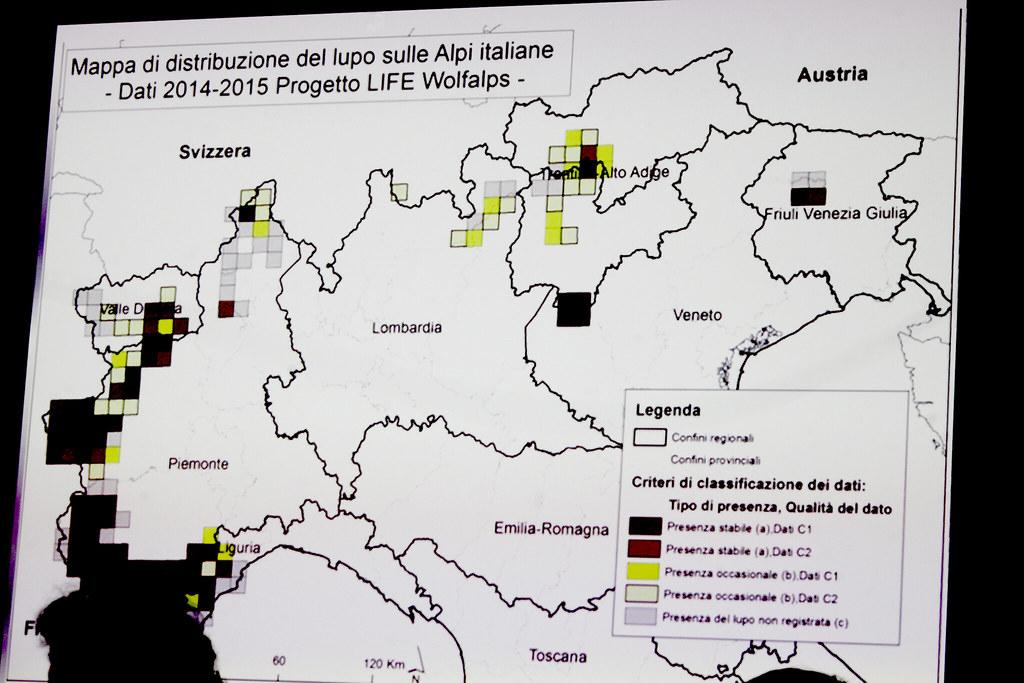 圓桌會議中,生態學家正說明狼在義大利的分佈區域,方塊格代表曾紀錄過的族群編號。在地圖中央的Lombardia是倫巴底區,而松德里歐位在該區的最北端,與瑞士為鄰。攝影者:李若韻