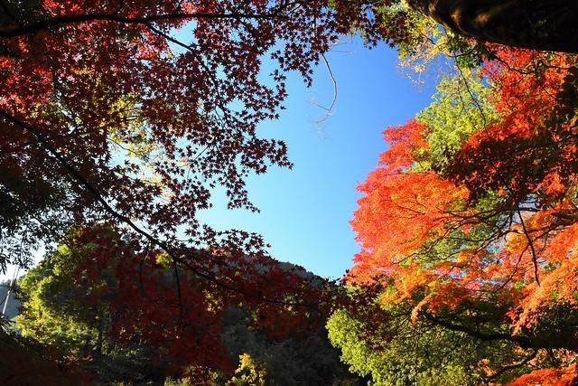 御岳渓谷の紅葉風景
