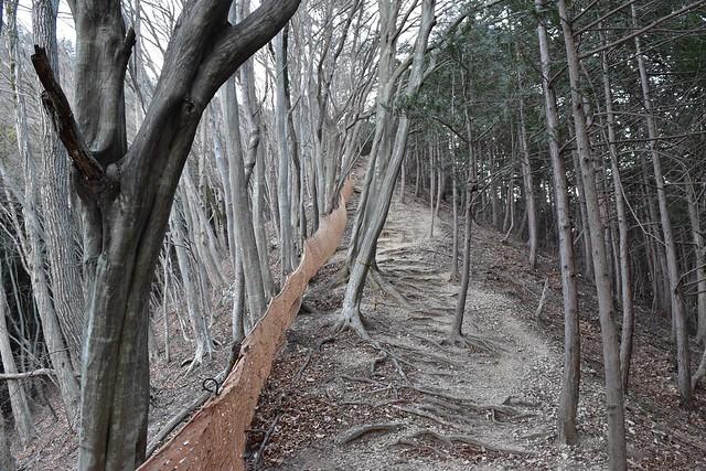 高川山登山道