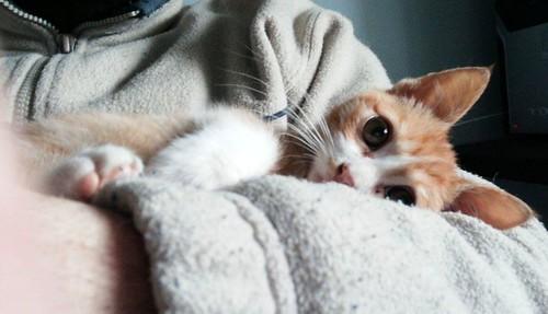 Rusty, gatito blanco y naranja adorable nacido en Diciembre´17, en adopción. Valencia. ADOPTADO. 39760640935_03874331ea