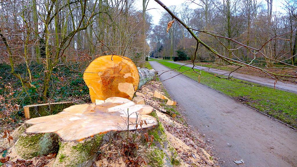 07 (20) февраля 2018, в парке Бенрат (Дюссельдорф) после бури.