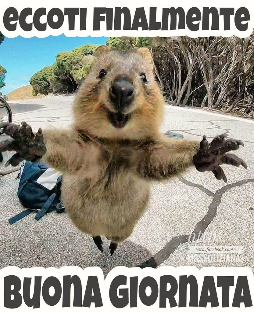 Link divertenti buongiorno buona giornata animal lo for Immagini divertenti buongiorno venerdi