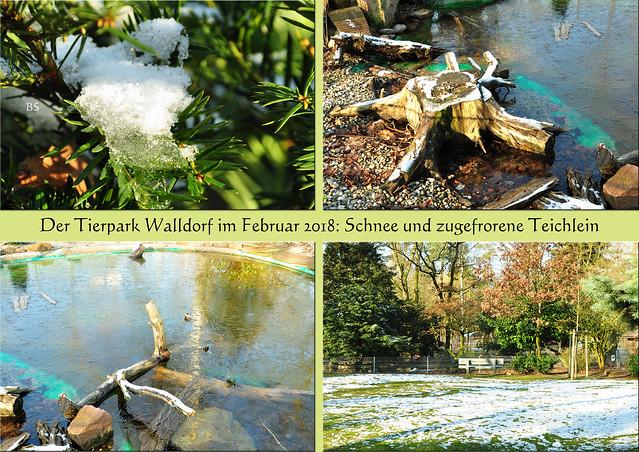 Tierpark Walldorf Februar 2018 ... Schnee ... Foto: Brigitte Stolle
