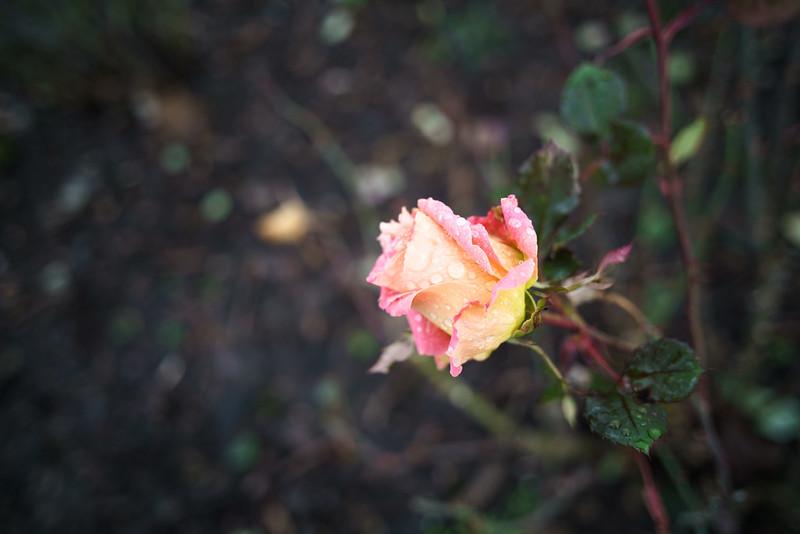 Sony A7RII | Carl Zeiss Contax G 28mm f/2.8 Biogon + 1.5m PCX | f/2.8