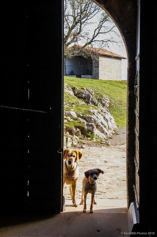 Perros esperando en la puerta de San Miguel de Aralar