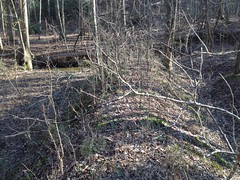 Little Log Creek Levee (Again)