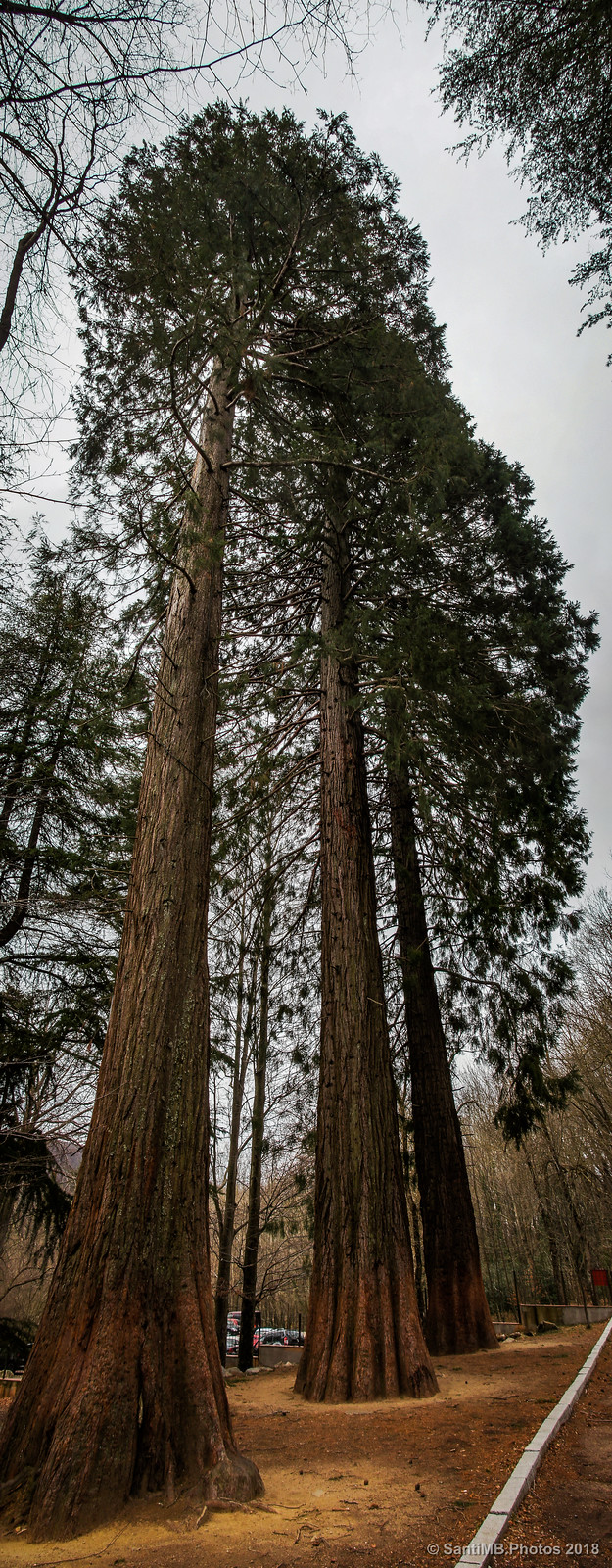Vertorama de las sequoias de Can Casades