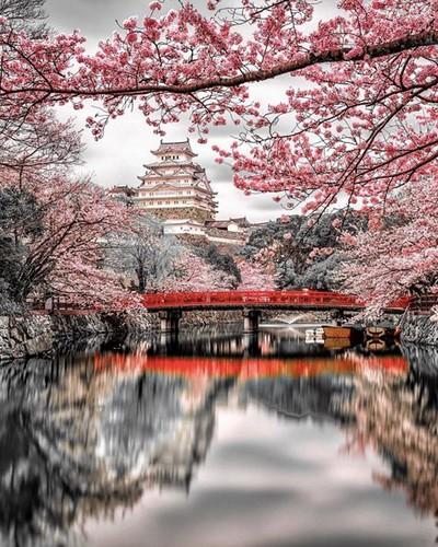 food Himeji Castle in Japan 😱 Jack...