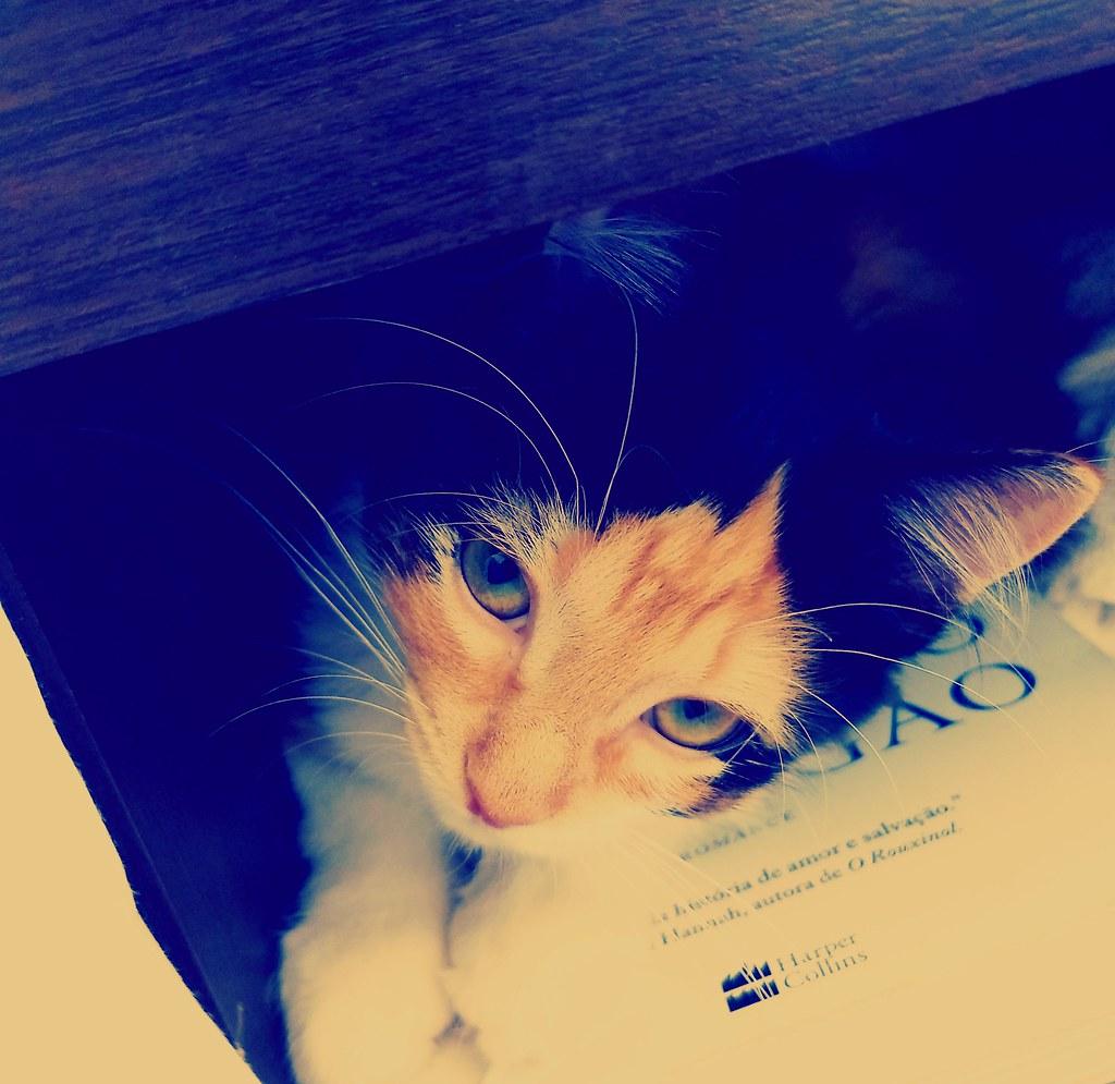 by jailsonrp Uma gata que gosta de dormir no criado mudo.   by jailsonrp 2c27045994
