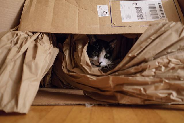 C'est bien connu : les chats ont une passion pour l'exploration de nouveaux cartons.