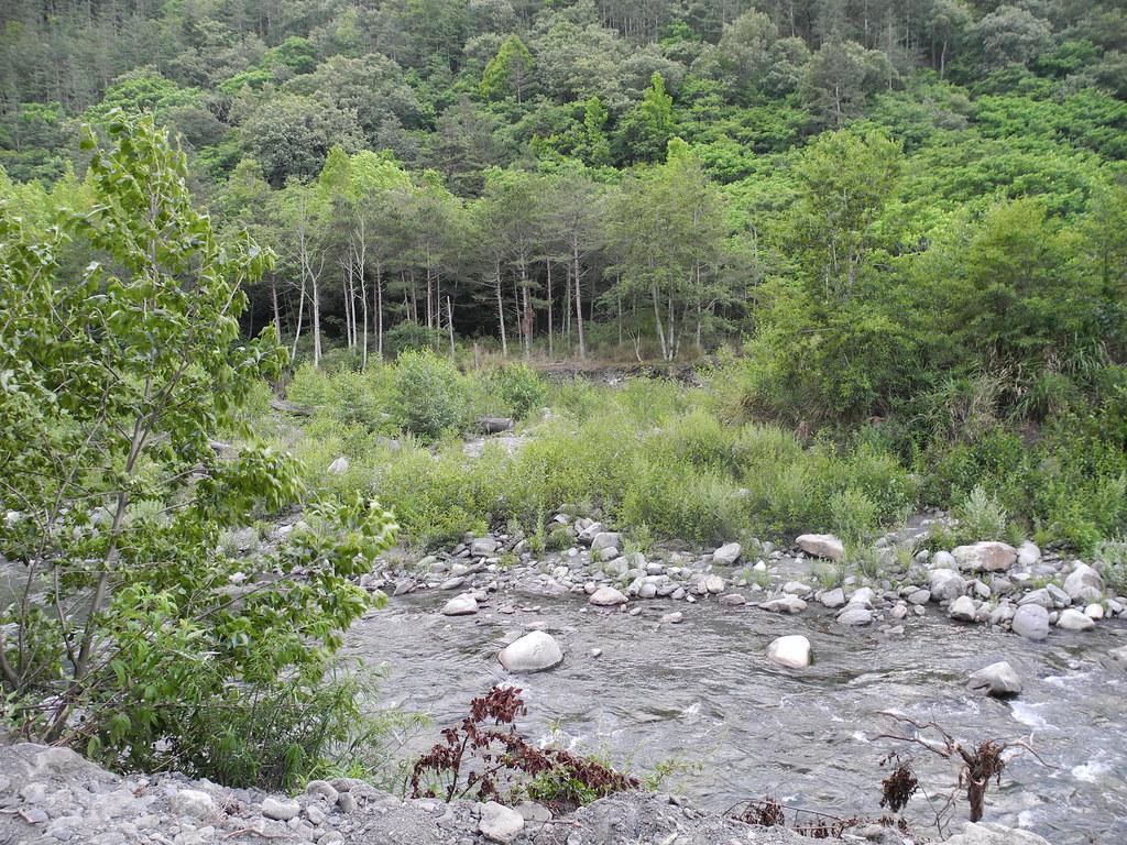 七家灣溪是台灣鈎吻鮭僅剩的棲地。攝影:廖靜蕙