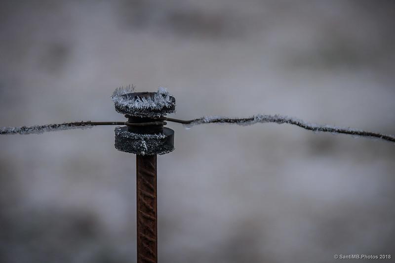 Escarcha en una alambrada