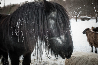 Merlin the Horse at Cold Antler Farm | by goingslowly